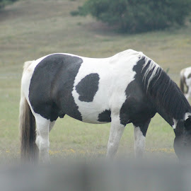You cant see me ! by Robin Hennon - Animals Horses (  )
