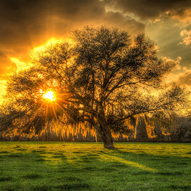 Beef Farm Tree by Jason Green - Landscapes Sunsets & Sunrises ( farm, tree, sunset, 904, st augustine )