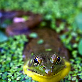Talking to Me by Rod Schrader - Animals Amphibians