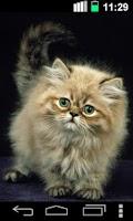 Screenshot of Ginger Cat Cute Wallpaper