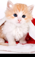 Screenshot of Christmas Cat Live Wallpaper