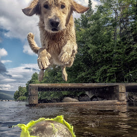 Marley by James Betts - Animals - Dogs Playing
