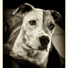 by Makis Aliferis - Animals - Dogs Portraits