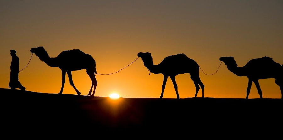 Sunrise in the Sahara. by Gale Perry - Animals Other ( , #GARYFONGDRAMATICLIGHT, #WTFBOBDAVIS )