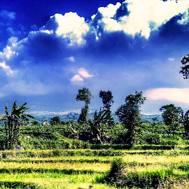 Blue Noon by Kho Santosa - Instagram & Mobile Android ( sky, blue, cloud, landscape, rice farm )