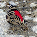 Eighty-nine butterfly