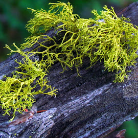 Growth by Rosalei Nateren - Nature Up Close Other plants ( plant, tree, wood, moss, lichen )