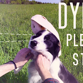 Dylan, please stop by Dylan Hendrick - Animals - Dogs Portraits ( love, stop, please, upset, beautiful, cute, dog, animal,  )