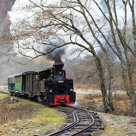 High speed & technology by George Marcu - Transportation Trains ( maramures, logging train, 2014, steam train, romania,  )