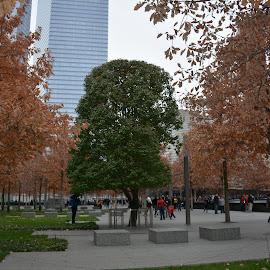 Survivor Tree by Donna Donofrio-Paterson - Nature Up Close Trees & Bushes ( world trade center, survivor tree, trees, new york city, landscape )
