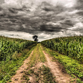 by Mattias Larsson - Landscapes Prairies, Meadows & Fields