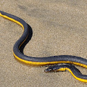 Yellow Sea Serpent