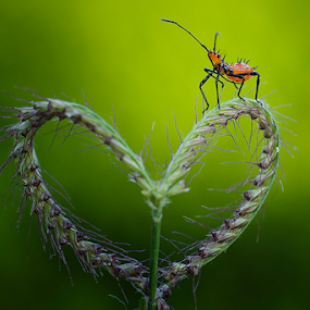 The love by Tamin Ibrahim - Animals Insects & Spiders