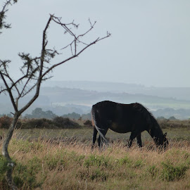 Black horse in the field by Mihaela Zhekova - Animals Horses ( nature, grass, horse, wildlife, forest )