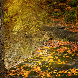 falling leaves by Paul Zeinert - Nature Up Close Leaves & Grasses ( water, daytime, wiscosnin, color, fall, falls, greenbay, rock, leaves )