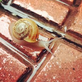 # rain by Seda Karadeniz - Instagram & Mobile Android ( snail, nature, photography )