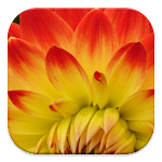 Free Photo Prints APK Image