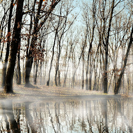 Forest , Fog And Lake shore by Murat Can - Landscapes Forests ( tree, fog, trees, forest, lake )