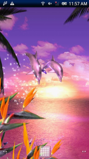 Dolphin★Ocean Trial