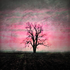 Tree at Sunset by Tricia Scott - Digital Art Places ( isolated, purple, tree, sunset, alone, lonely )