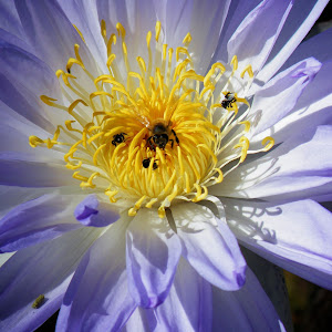 Bee10.jpg