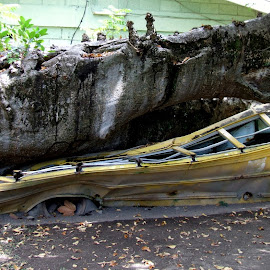Nature vs Man by Mikki W - Transportation Other ( accident, bus, nature, tree, crush, squashed, dominica )