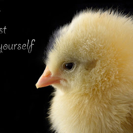 Must trust yourself by Mohamed Mahdy - Typography Captioned Photos ( chick, trust, nikon,  )