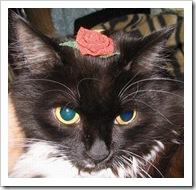 rose-cat