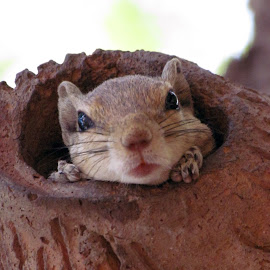 ISN'T IT CUTE by Monal Bherwani - Animals Other ( ahmedbad, gujarat, india, squirrel, animal )