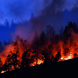 Wildfire West Kelowna 2014 by Don Mann - News & Events Disasters ( wildfire, forest fire, wild fire, forest, fire )