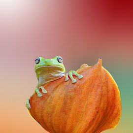 hy ^^ by Andri Priyadi - Animals Amphibians