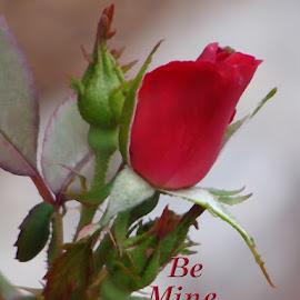 Be Mine Valentine by Vivian Gordon - Typography Captioned Photos
