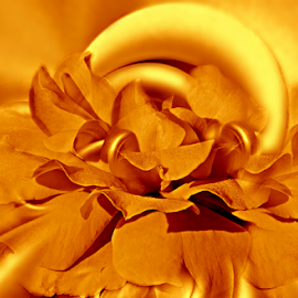GOLDEN ROSE by Carmen Velcic - Digital Art Abstract ( abstract, roses, yellow, gold, flowers, digital )
