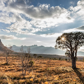 A lonely tree by Benny Høynes - Landscapes Prairies, Meadows & Fields ( tree, cloudes, shine, landscapes, sun, norway )