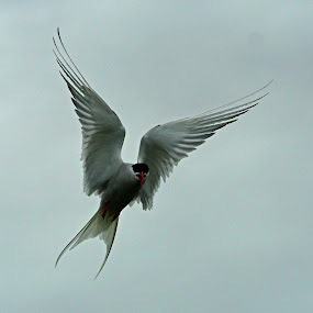 by Bob Rawlinson - Uncategorized All Uncategorized ( farnes )