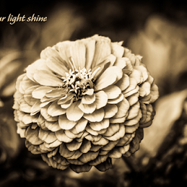 Let your light shine by Suzana Trifkovic - Typography Quotes & Sentences ( plant, text, quote, shadow, dark, light, flower )