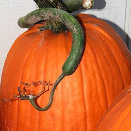 The Great Pumpkin by Marsha Biller - Food & Drink Fruits & Vegetables ( full frame, orange, pumpkin, curly stem, large )