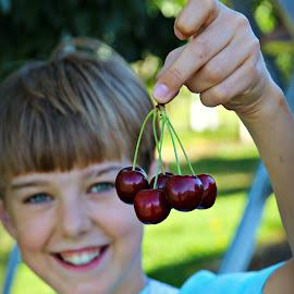 Harvest day by Bob Ward - Food & Drink Fruits & Vegetables