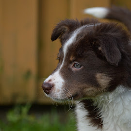 Nala by Veerle Melkebeke - Animals - Dogs Puppies