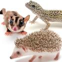 かわいい小動物図鑑 icon