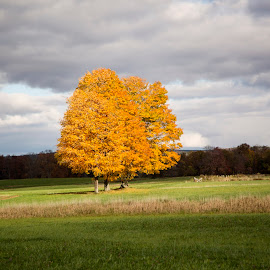 Fall Colors by Burani Tourville - Landscapes Prairies, Meadows & Fields ( fall, color, colorful, nature )