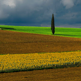 Tuscany Fields by Fed  ® - Landscapes Prairies, Meadows & Fields