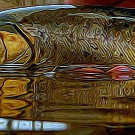 by Steve Arthur - Animals Fish