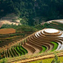 WATERING TO FARM by Linh TranAnh - Landscapes Travel ( field, water, terrace, rice, vietnam, mu cang chai, crop )
