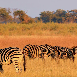 by Shashank Pattekar - Novices Only Wildlife
