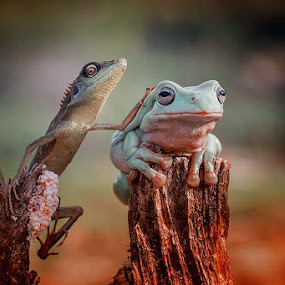 with friend by Hendy Mp - Animals Other