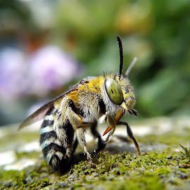 another green strip bee picture by Hendrata Yoga Surya - Instagram & Mobile Android