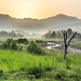 A beautiful sunrise by Shivaang Sharma - Landscapes Forests ( nature, tree, chilla, sunset, sunrise, landscape, rajaji, river )