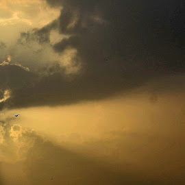 glory by Vidur Jyoti - Landscapes Cloud Formations ( bird, clouds, sky, sunrise )