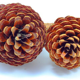 Pine Cones by Sanjib Paul - Abstract Patterns